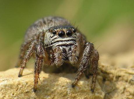 Представители пауков: общая характеристика класса паукообразных, ядовитые виды