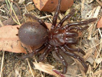 Ноги пауков, разновидности конечностей, виды членистоногих в России, ядовитые особи